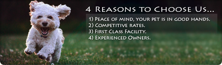 4 Reasons to choose us: 1) Pease of Mind, your pet is in good hands, 2) Competitive Rates, 3) First Class Facility, 4) Experienced Owners